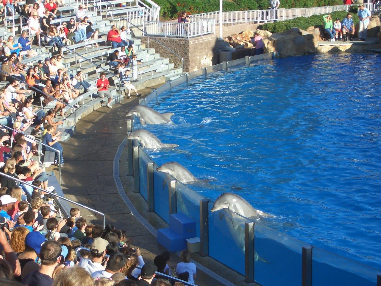 Sea World Becken mit Delfinen