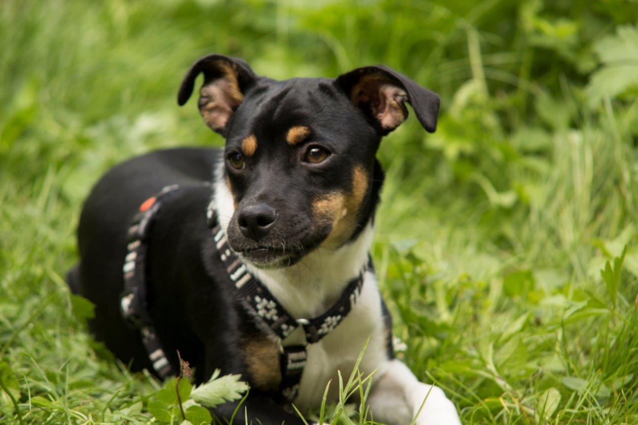 2013-08-Hund-Raja-3616-c-Conny-Maisch_PETA-D