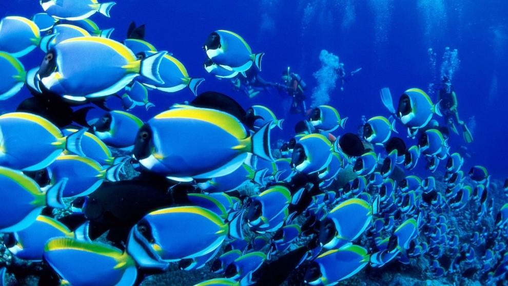 Fische und meerestiere stilles leid f r unser essen for Fisch bilder