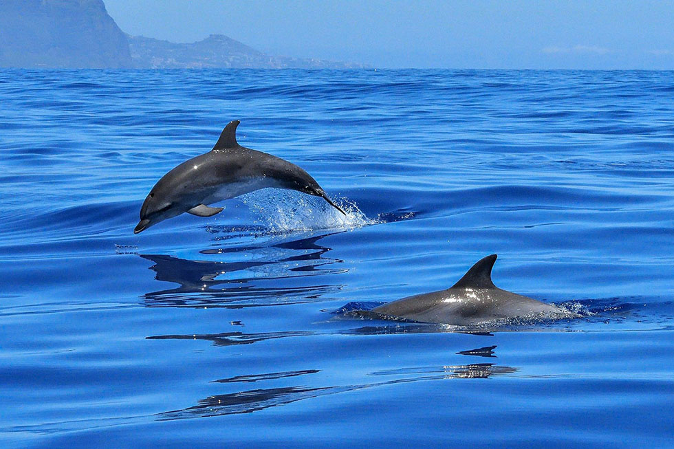 delfine in freiheit