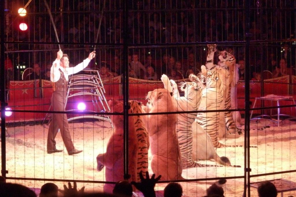 Denkst du, ein Tiger würde das freiwillig machen? Foto: (c) PETA