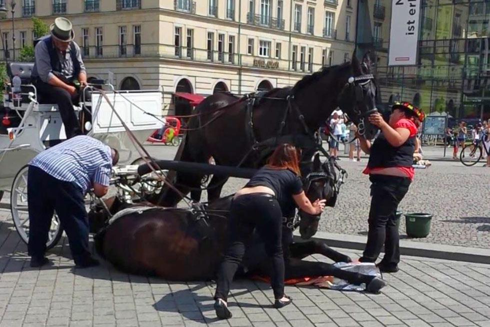 pferd zusammengebrochen
