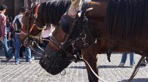 pferd mit maulkorb