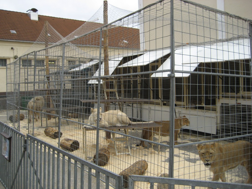 2008-03-02-Loewen-Circus-Krone-Winterlager-Muenchen-0434-c-PETA-D-Jan-Pfeiffer