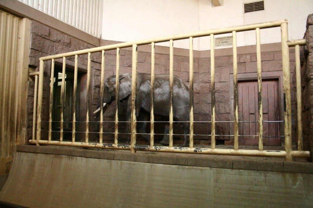 2009-02-02-Afrika-Innen-L2-Elefant-Tembo-Berlin-c-PETA-D