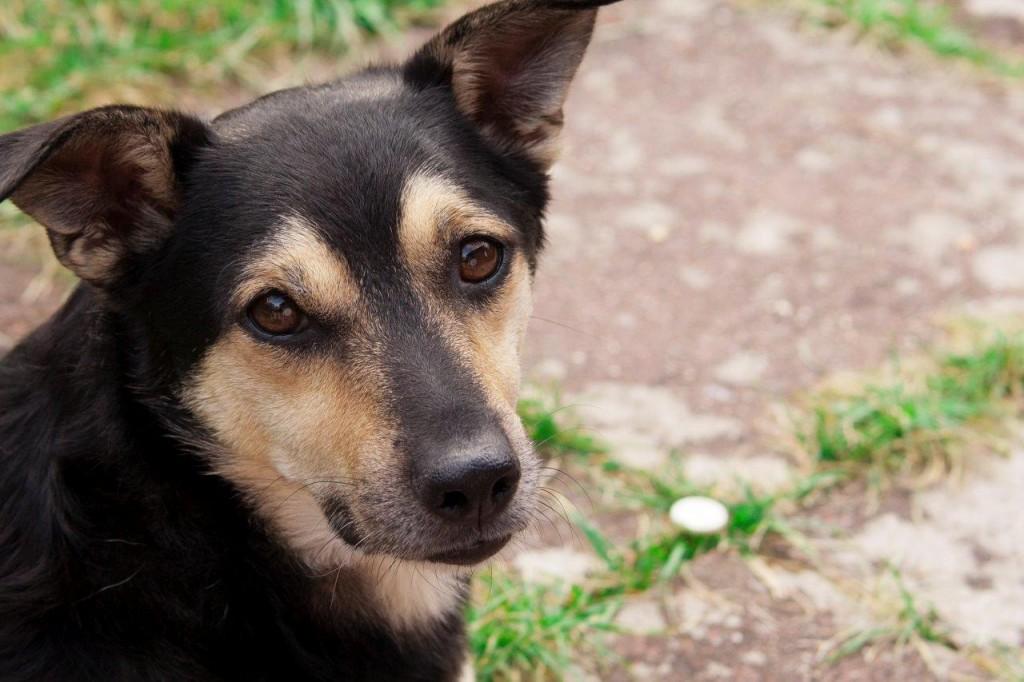 2012-Hund-Jack-05-c-PETA-D-Conny-Maisch