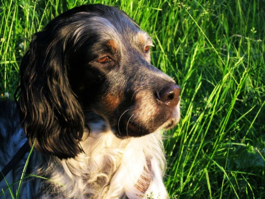 Auch Finchen hat in einem Tierheim gelebt, bis sie von liebevollen Menschen adoptiert wurde. Foto (c): PETA.