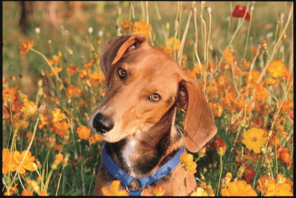 Hund-Olive-c-PETA-USA-Tal-Ronnen