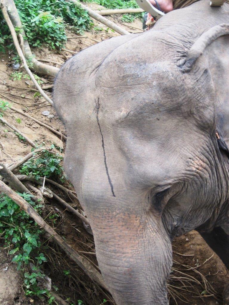 2014-10-07 Elefantenreiten Chiang mai Thailand elephant camp 4 -c- PETA D