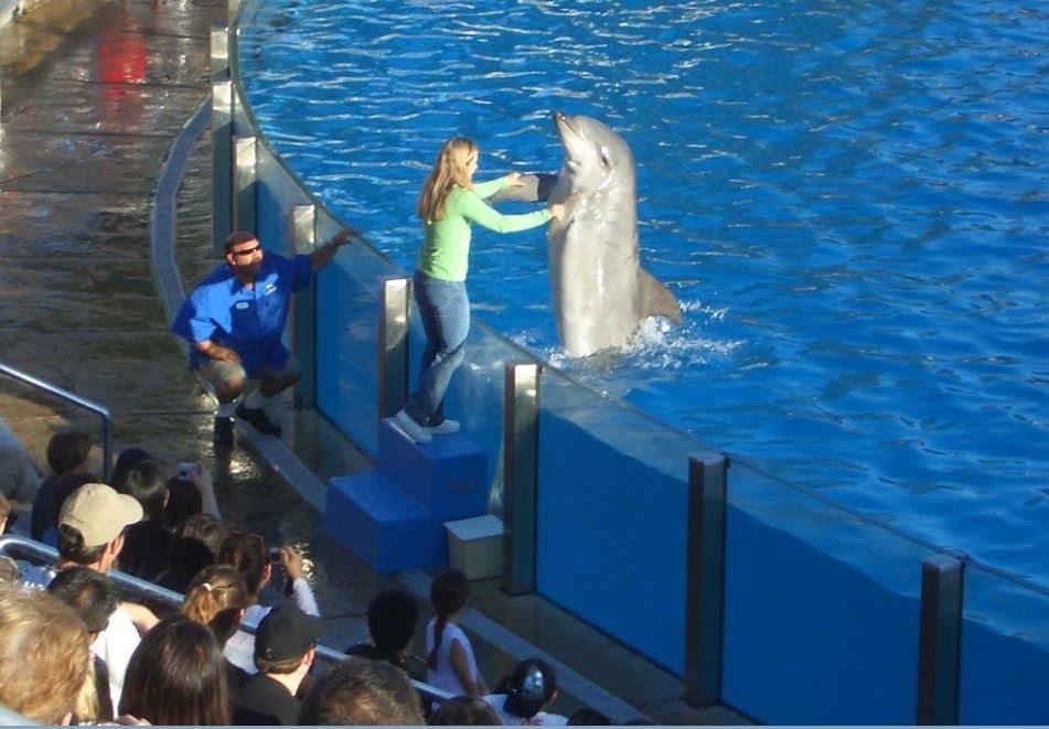 Delfin_mit_Kind