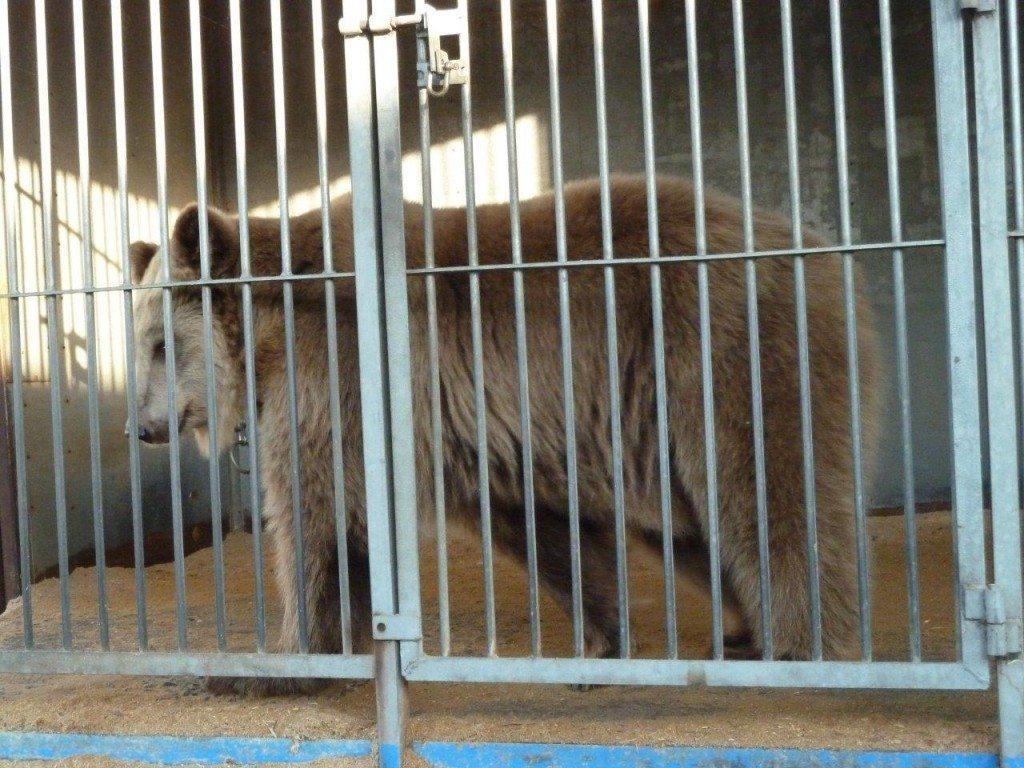 2011-11-06-Circus-Luna-Winnenden-P1020417-c-PETA-D