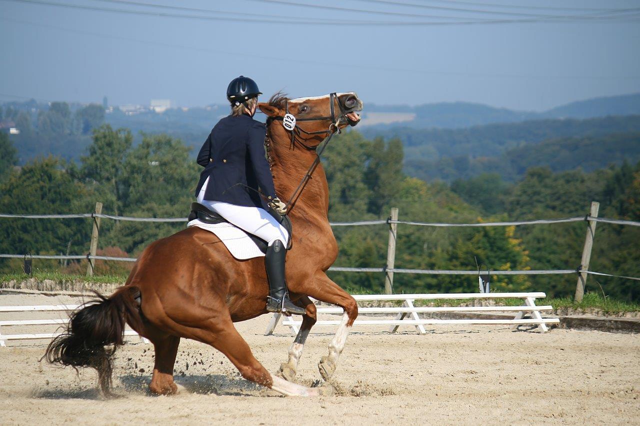 reiten auf dem pferd und ficken in den arsch