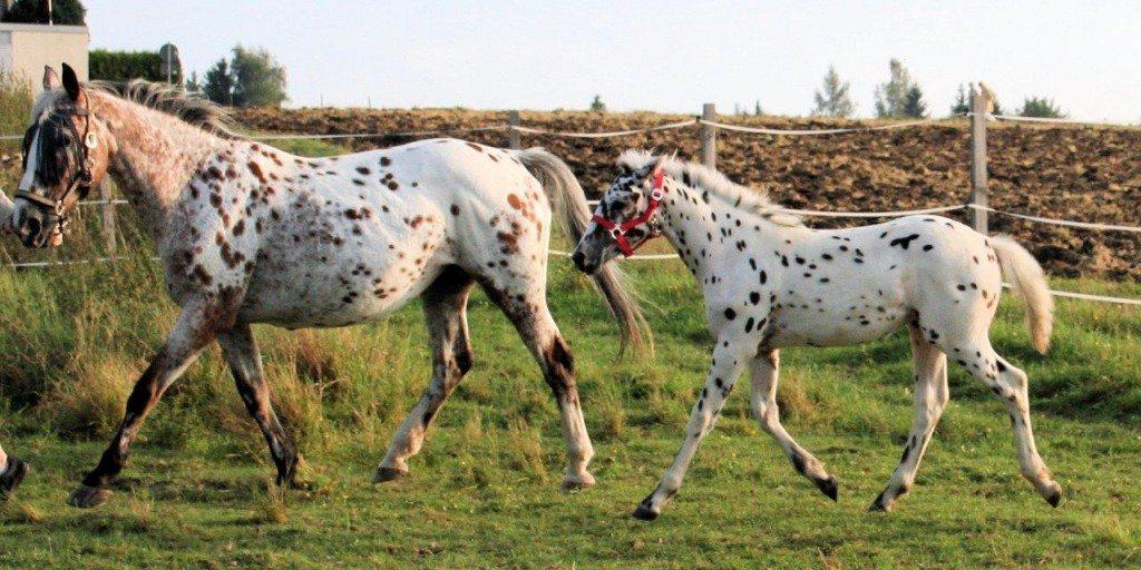 Pferd-Stute-Lis-mit-Fohlen-c-PETA-D