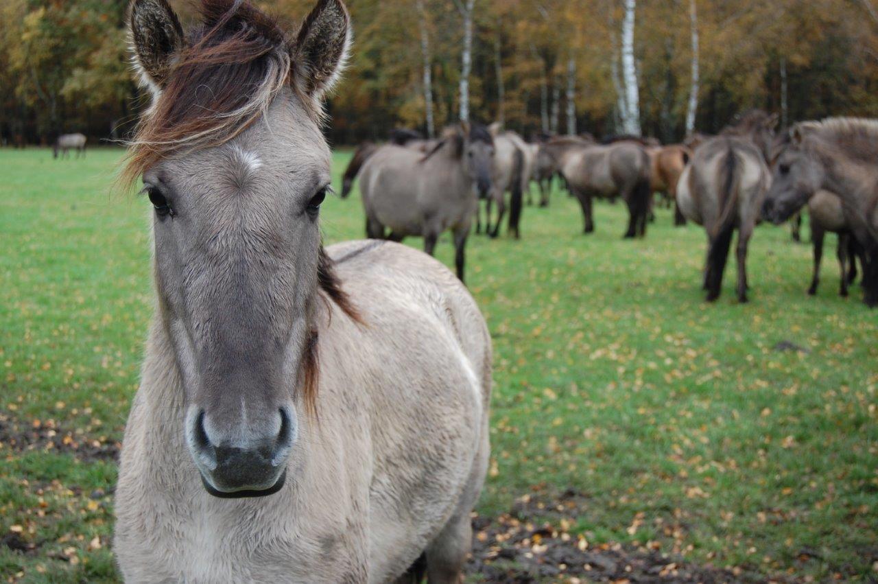 Wilde-Pferde-066-c-PETA-D