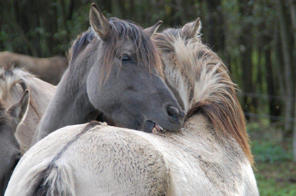Wilde-Pferde-097-c-PETA-D