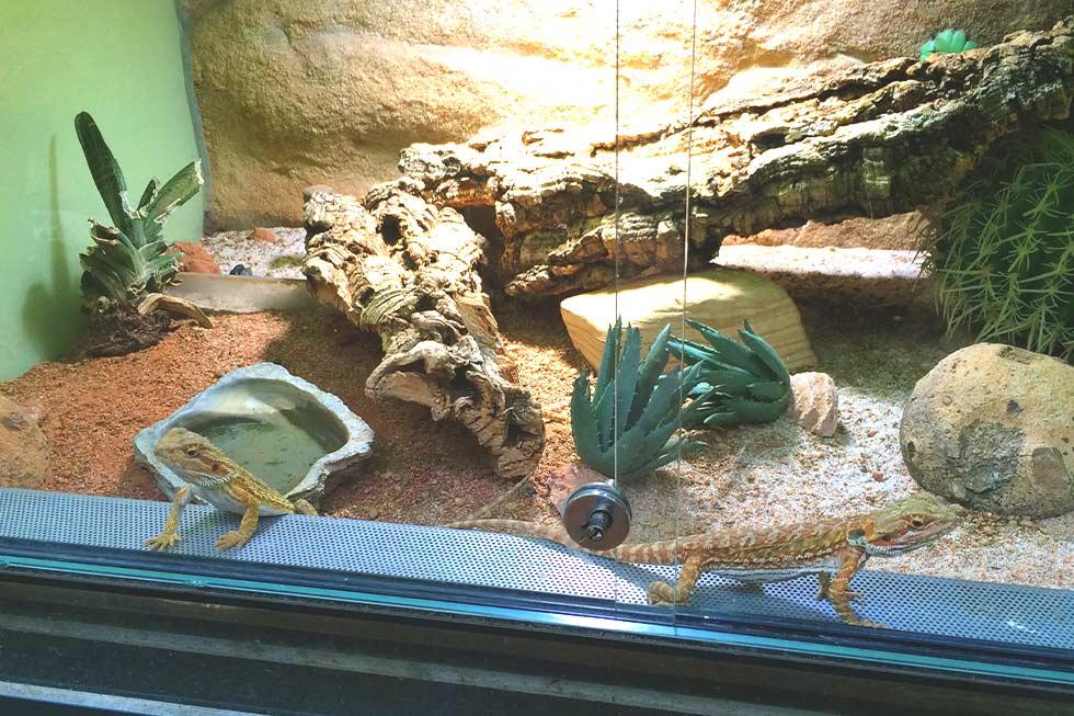 Reptilien im Terrarium