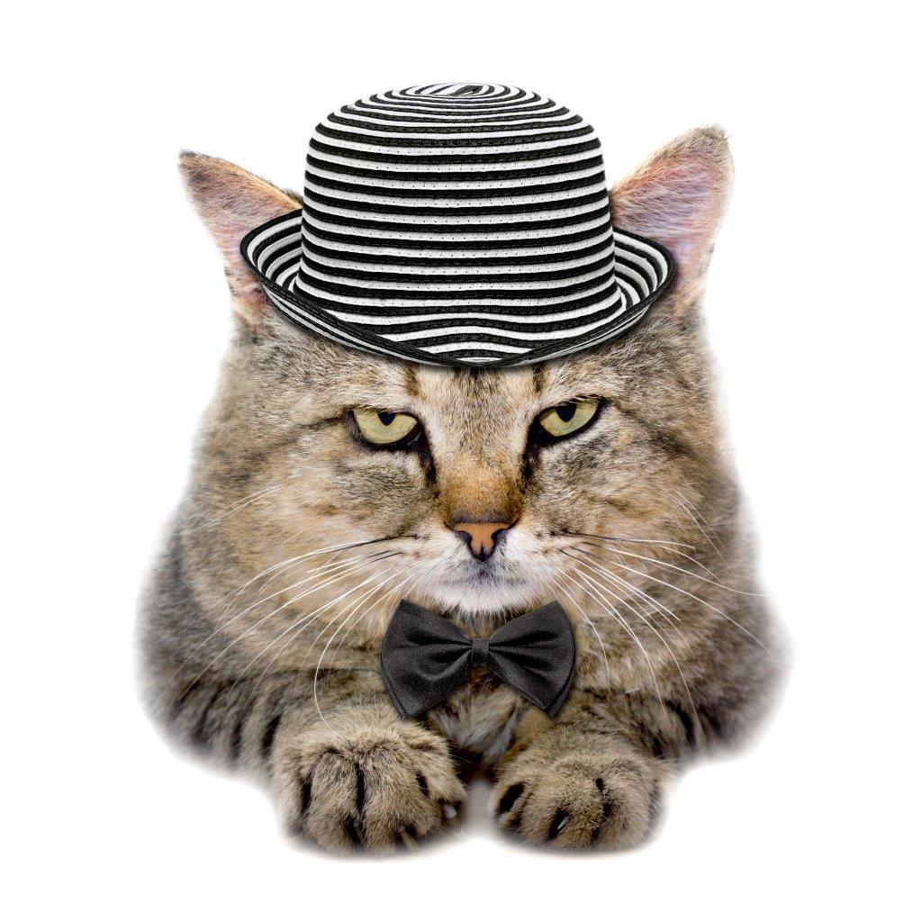 Katze-mit-Hut-3257398_original_clipdealer