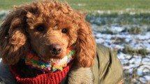 Bekleidung für deinen Hund. Foto: (c) PETA