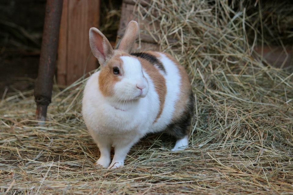 Kaninchen-2-c-PETA