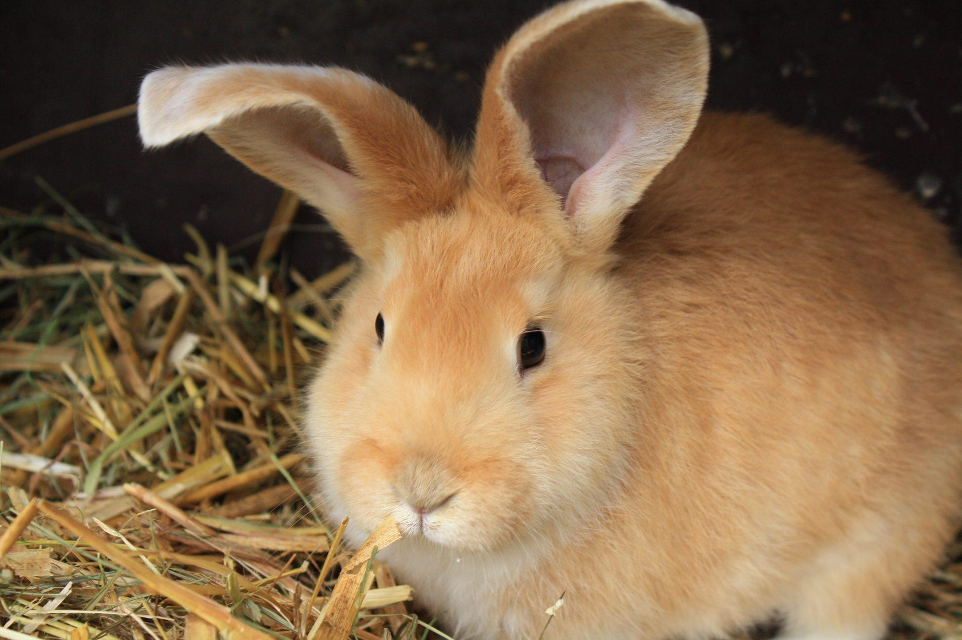 Was du über Kaninchen wissen solltest. Foto: (c) PETA