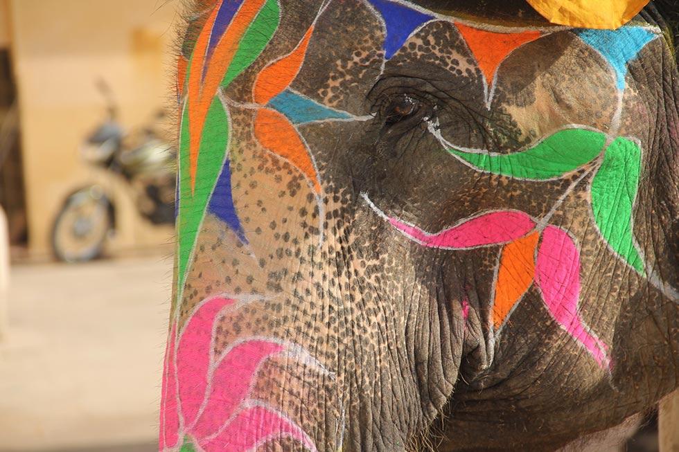 Elefant mit bemaltem Gesicht