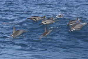 delfin-2886189-m-c-red-baron-istockphoto