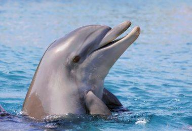 delfin-2922340-m-c-skynesher-istockphoto