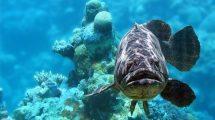 Fische sind Freunde - kein Mittagessen!