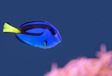 Findet Dorie - und lasst Fische in Freiheit leben