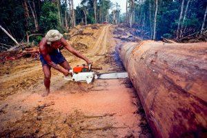 deforestation-istock_000022806843-c-mslightbox