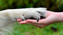 Mit diesen Tipps wirst du zum Helden für Tiere (Teil 1) - Was du alles tun kannst, um Tieren in Not zu helfen, um zum Helden für Tiere zu werden