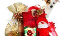 hund-weihnachtsgeschenke-3291900_original_clipdealer