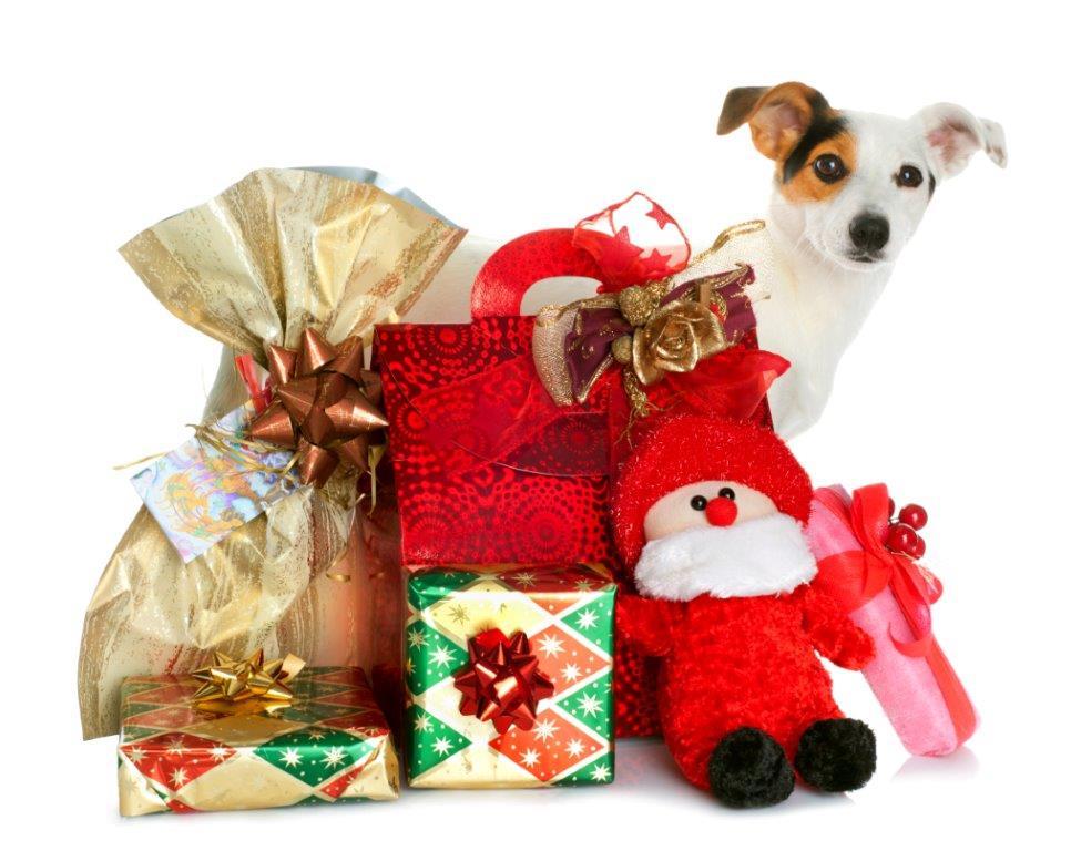 Weihnachtsgeschenke Keine Idee.Ein Tier Als Weihnachtsgeschenk Keine Gute Idee Petakids