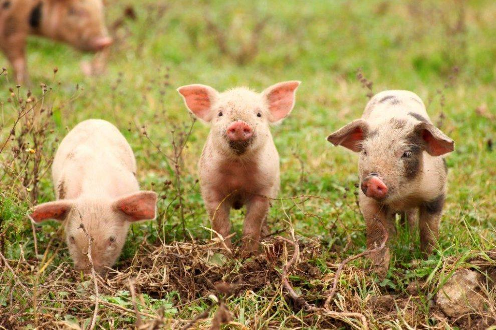 Gedicht Hort Bitte Auf Tiere Zu Essen Petakids