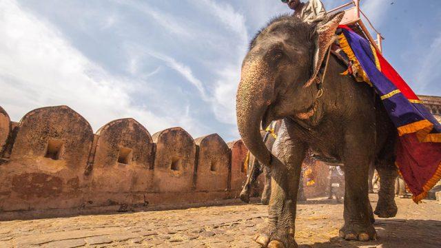Mann reitet auf Elefant