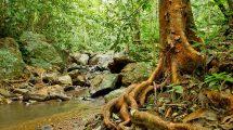 Lebensraum Baum mit Wurzeln im Wald