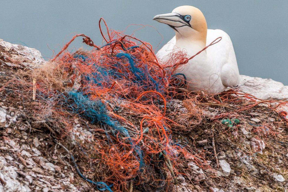 Vogel mit altem Fischernetz