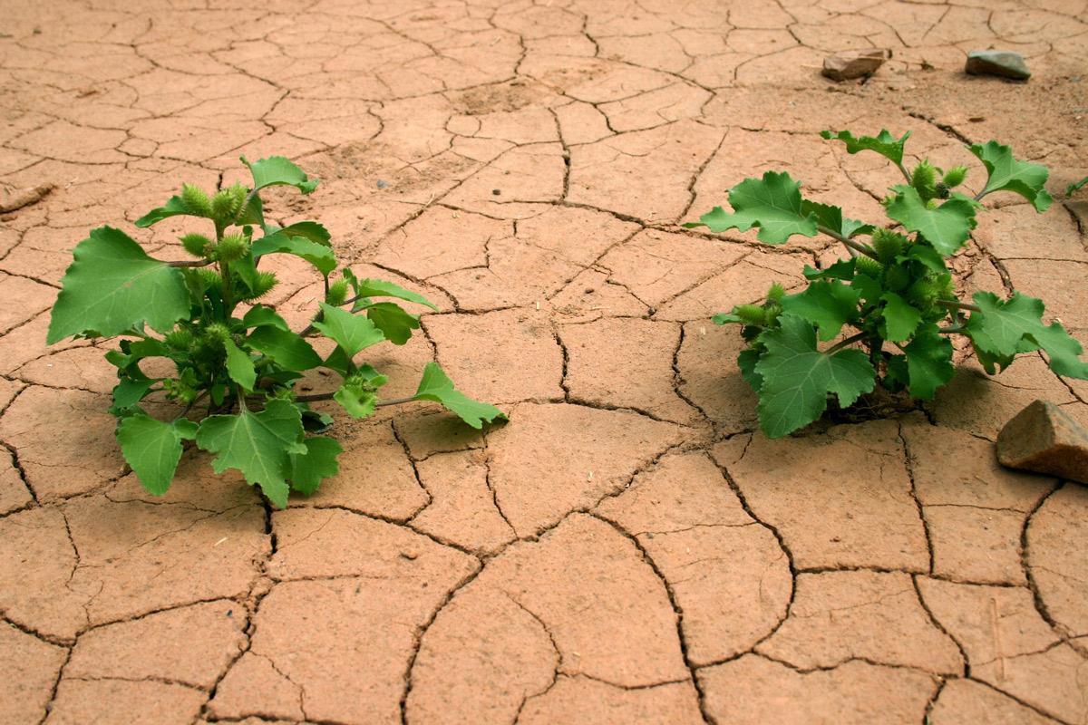Trockener Boden, Dürre.