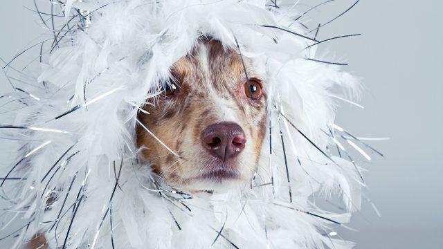 Verkleideter Hund