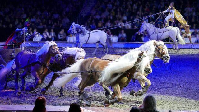 Pferde bei Cavalluna