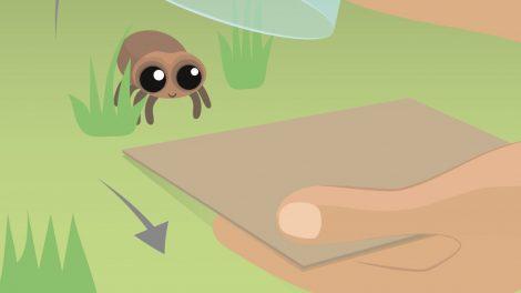 Spinnen retten