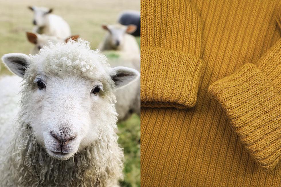 Schaf und Pullover