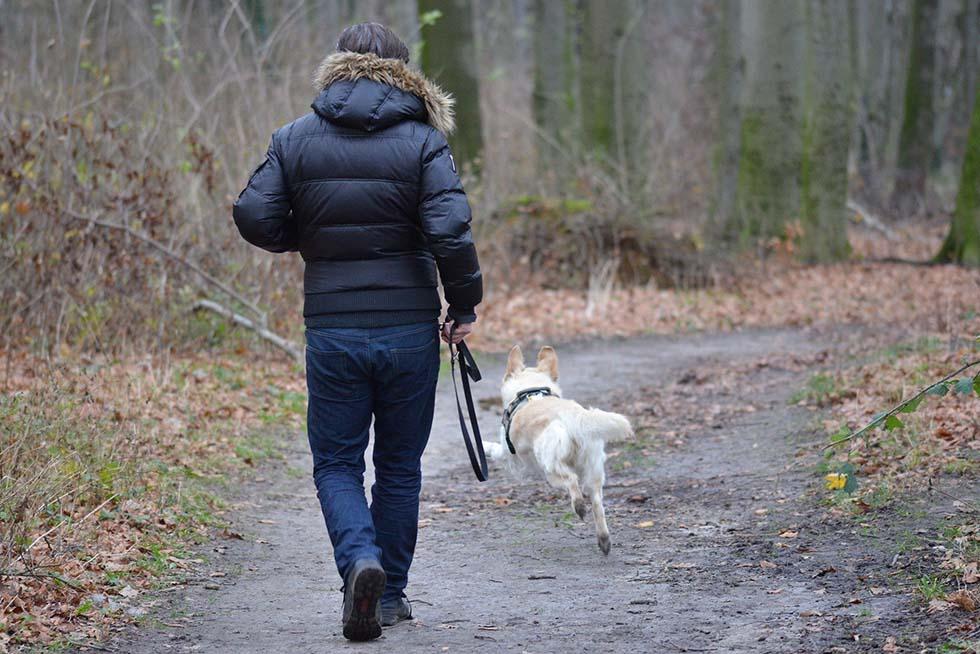 mann rennt mit hund im wald